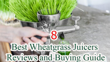 Top 8 Best Wheatgrass Juicers To Buy in 2021 Reviews